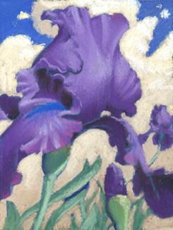 purple iris  |  pastel study